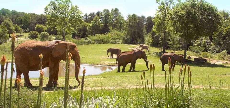 Habitats | North Carolina Zoo