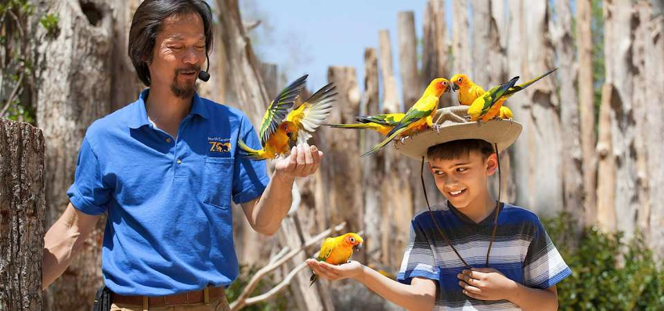 Guest interacting with sun conures during Birds in Flight show