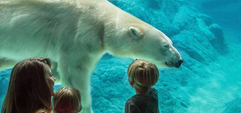A family watches a polar bear swim underwater at the North Carolina Zoo.
