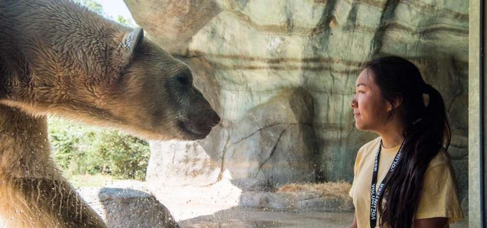Zoo intern at polar bear