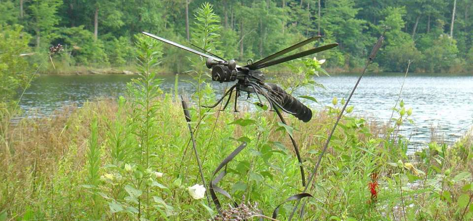 Lisa's Dragonfly