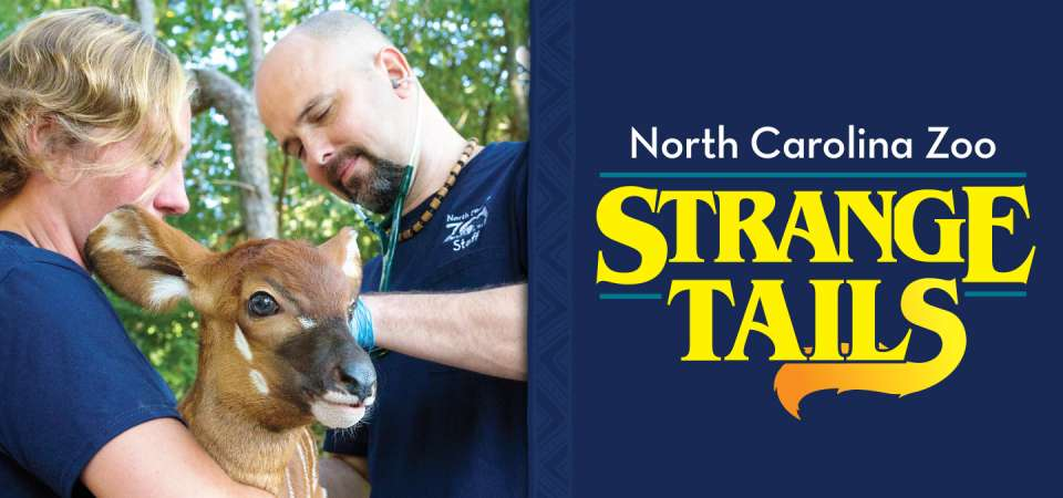 North Carolina Zoo - Strange Tails 4 part series at Four Saints Brewery