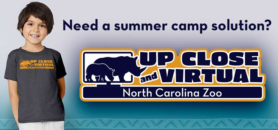 North Carolina Zoo VIRTUAL camps now available!