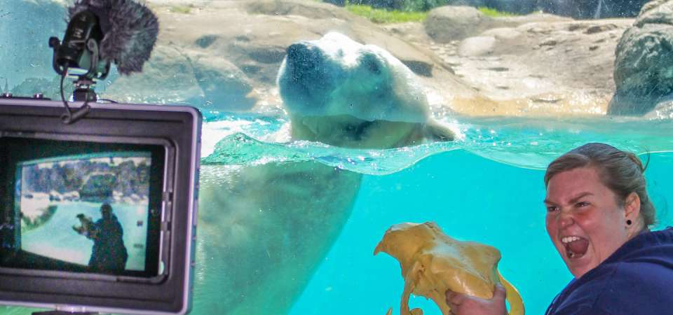 Virtual classroom from polar bear under water viewing