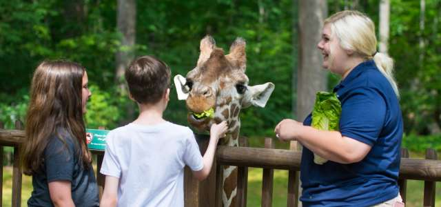 Seasonal giraffe deck staff for attractions on Park