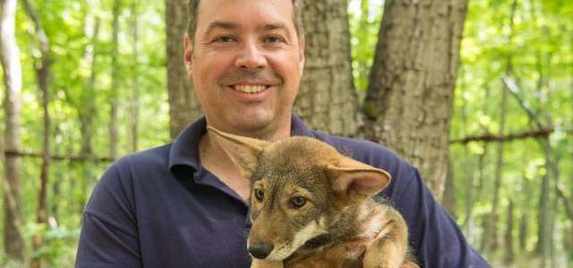 Expanding the Red Wolf Pack | North Carolina Zoo