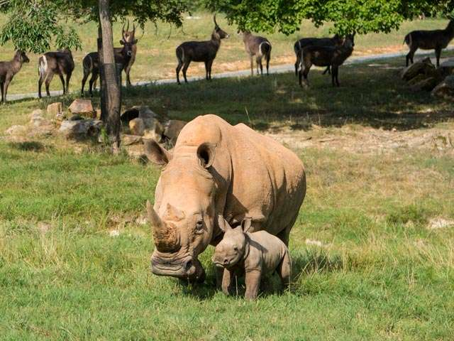 Mom Linda and Baby Nandi
