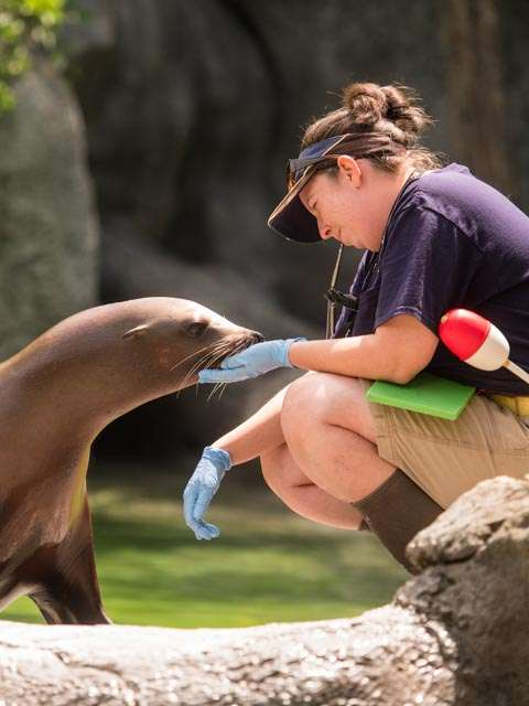 Keeper caring for sea lion