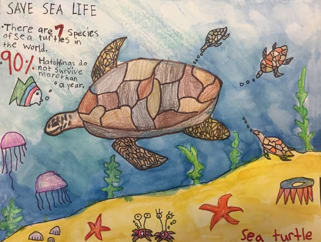 Sea Turtle Endangered Species Poster